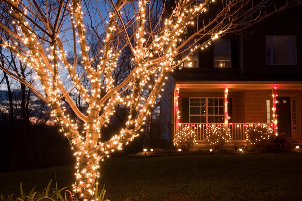 этом деле гирлянды на деревья светодиодные фото развалинам проходит